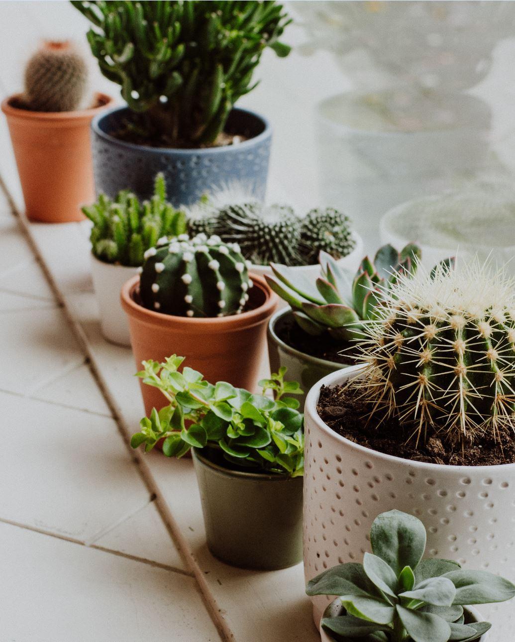 Du vert dans son intérieur : nos astuces pour vos plantes d'intérieur